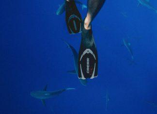 zwemmen met haaien