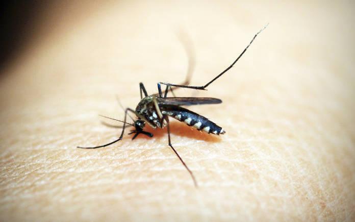 malaria preventie zuid-Afrika