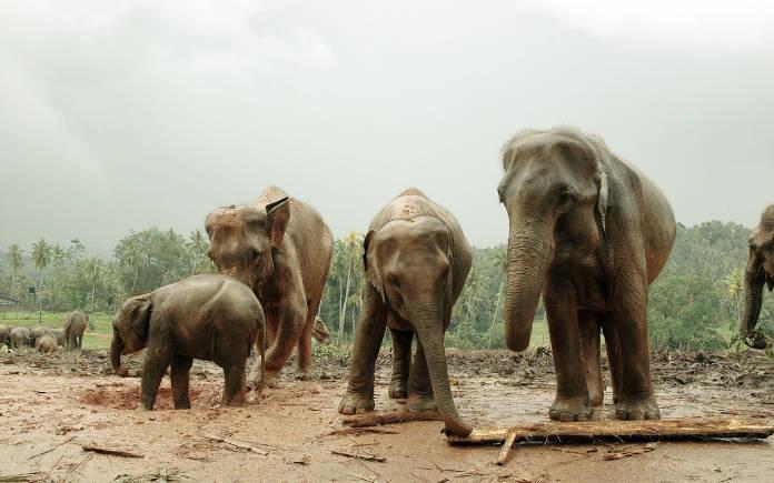 visum aanvragen Sri Lanka