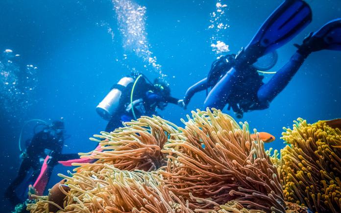 duiken Tenerife activiteiten