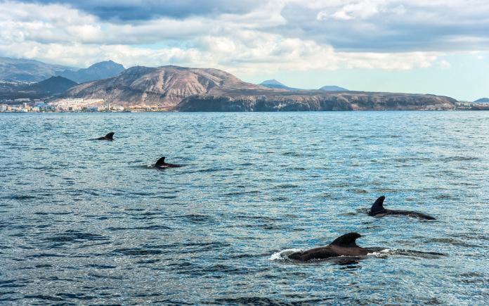 walvissen Tenerife Dolfijnen